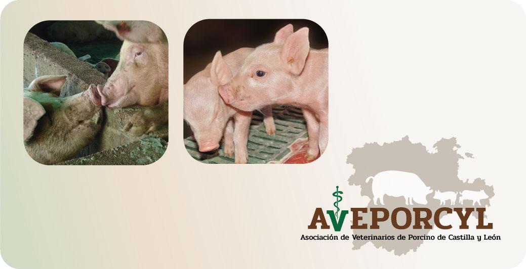 AVEPORCYL Asociación de veterinarios de Castilla y León